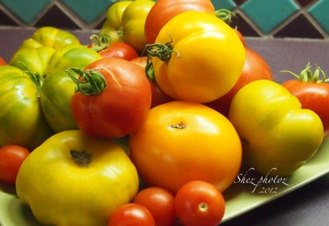 Tomatoes in green, gold, yellow, orange and even red.